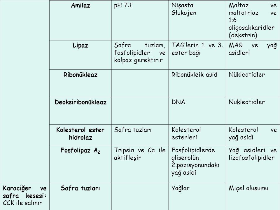 AmilazpH 7.1Nişasta Glukojen Maltoz ve maltotrioz ve 1:6 oligosakkaridler (dekstrin) LipazSafra tuzları, fosfolipidler ve kolpaz gerektirir TAG'lerin