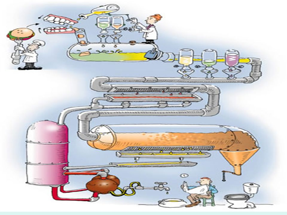 Asiditenin tamponlanması ve intestinal sindirim ve emilim Kısmi sindirilmiş besinler ve asid duodenuma ulaşır Mide (besin geçişi) Gastrin salgılanması  asid ve pepsin salınımı  motilite ve kan akımı CCK ve sekretinGIP İnsülin sekresyonu Pankreatik ve bilier sekresyon (ib'da) (-) pH<1.5
