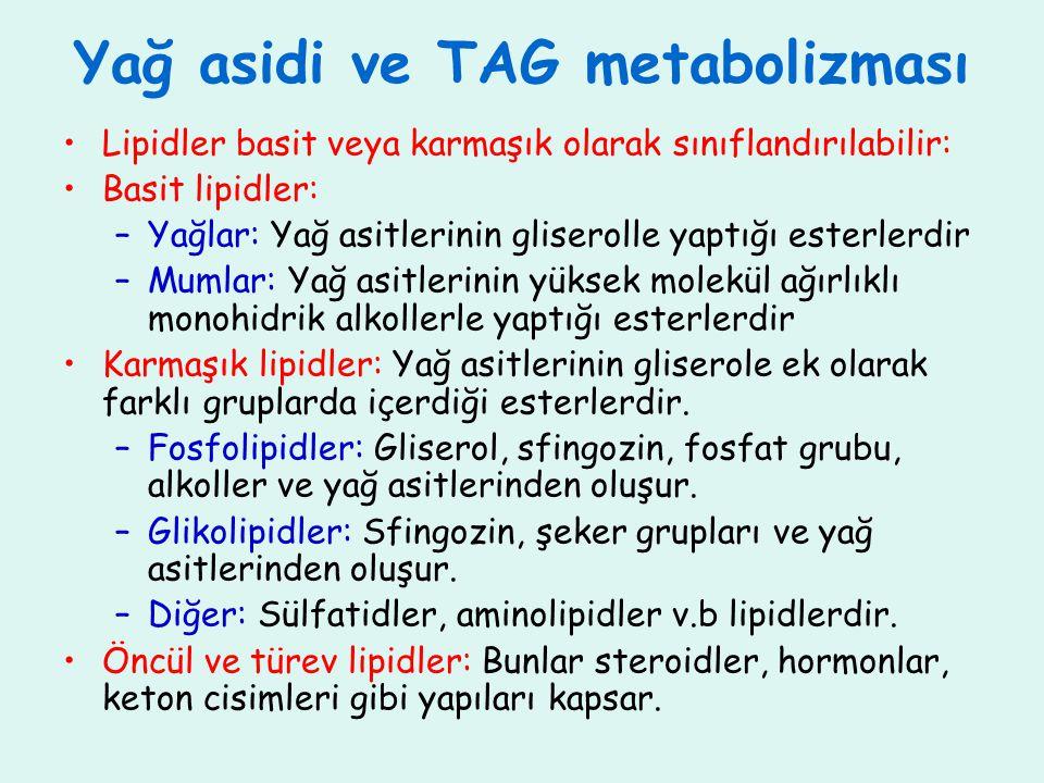 Yağ asidi ve TAG metabolizması Lipidler basit veya karmaşık olarak sınıflandırılabilir: Basit lipidler: –Yağlar: Yağ asitlerinin gliserolle yaptığı es