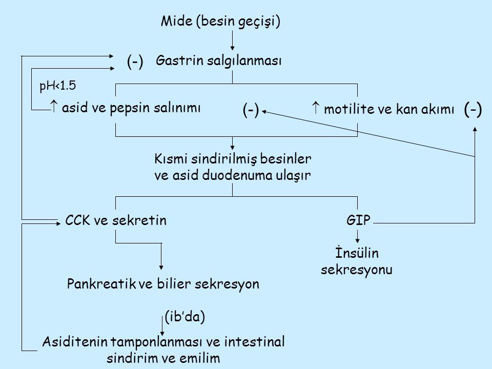 Asiditenin tamponlanması ve intestinal sindirim ve emilim Kısmi sindirilmiş besinler ve asid duodenuma ulaşır Mide (besin geçişi) Gastrin salgılanması