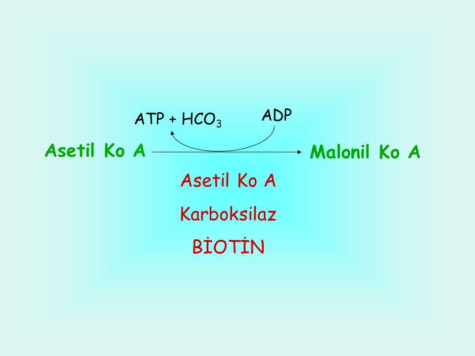 Asetil Ko A Malonil Ko A Asetil Ko A Karboksilaz BİOTİN ATP + HCO 3 ADP