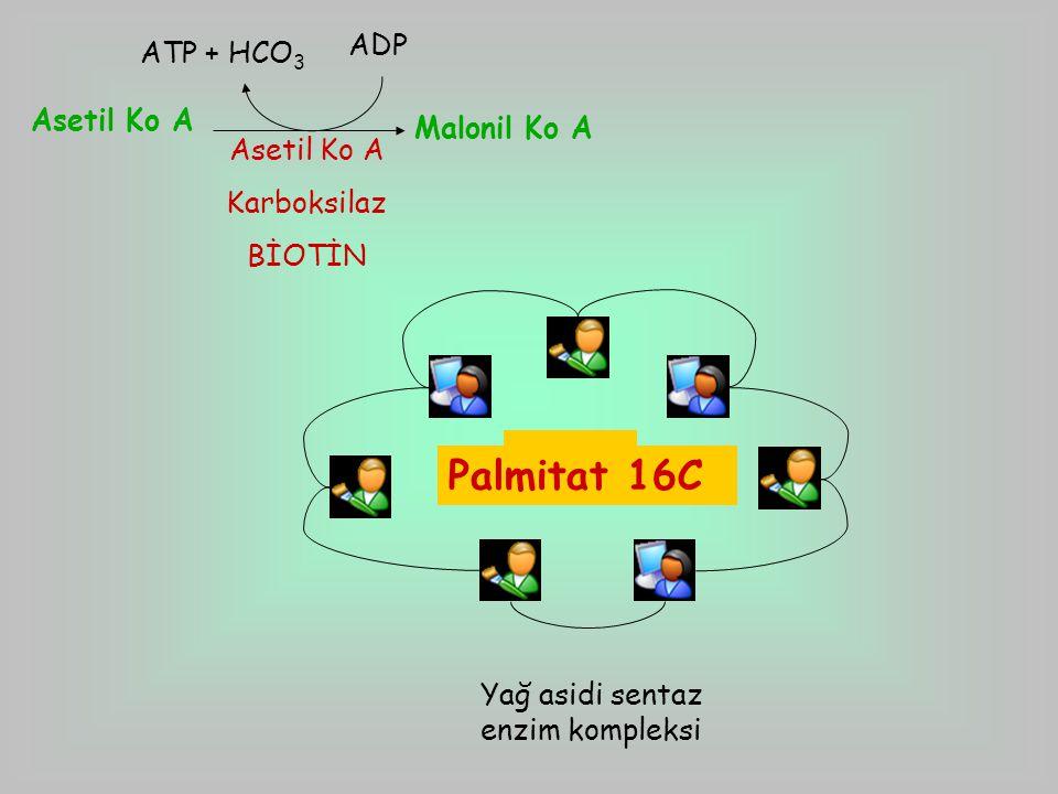 Asetil Ko A Malonil Ko A Asetil Ko A Karboksilaz BİOTİN ATP + HCO 3 ADP Yağ asidi sentaz enzim kompleksi 4C6C8C10C12C14C16C Palmitat 16C