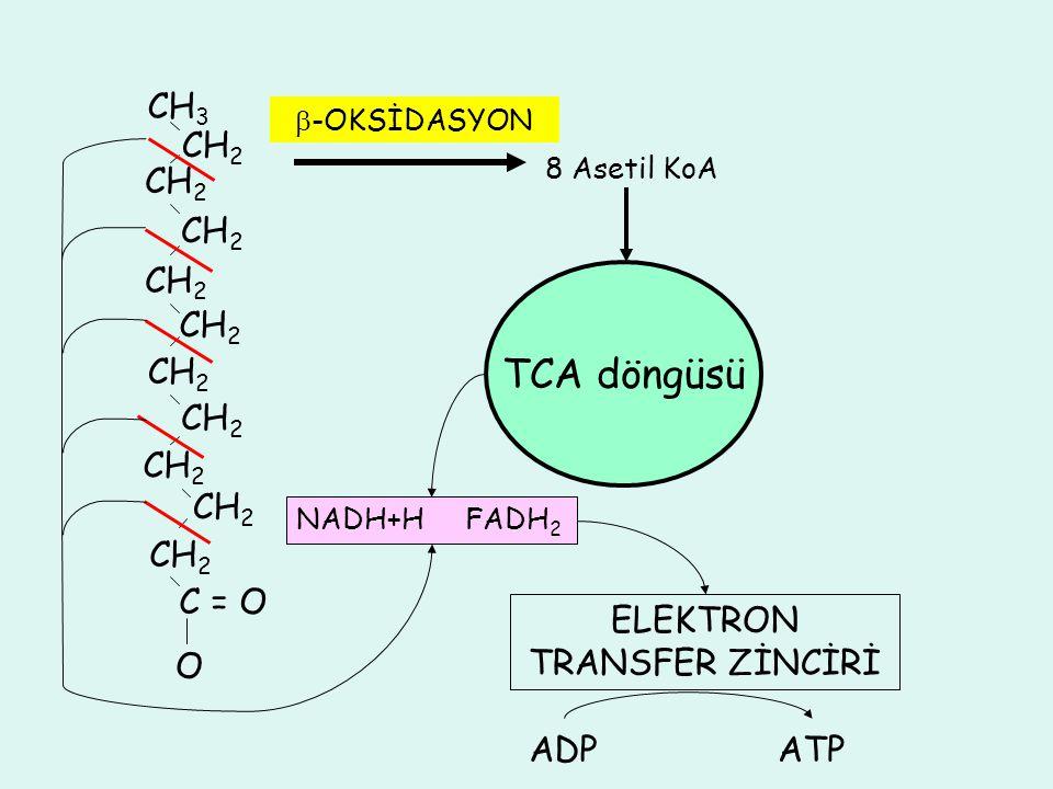 CH 3 CH 2 C = O O  -OKSİDASYON 8 Asetil KoA TCA döngüsü NADH+H FADH 2 ELEKTRON TRANSFER ZİNCİRİ ADPATP
