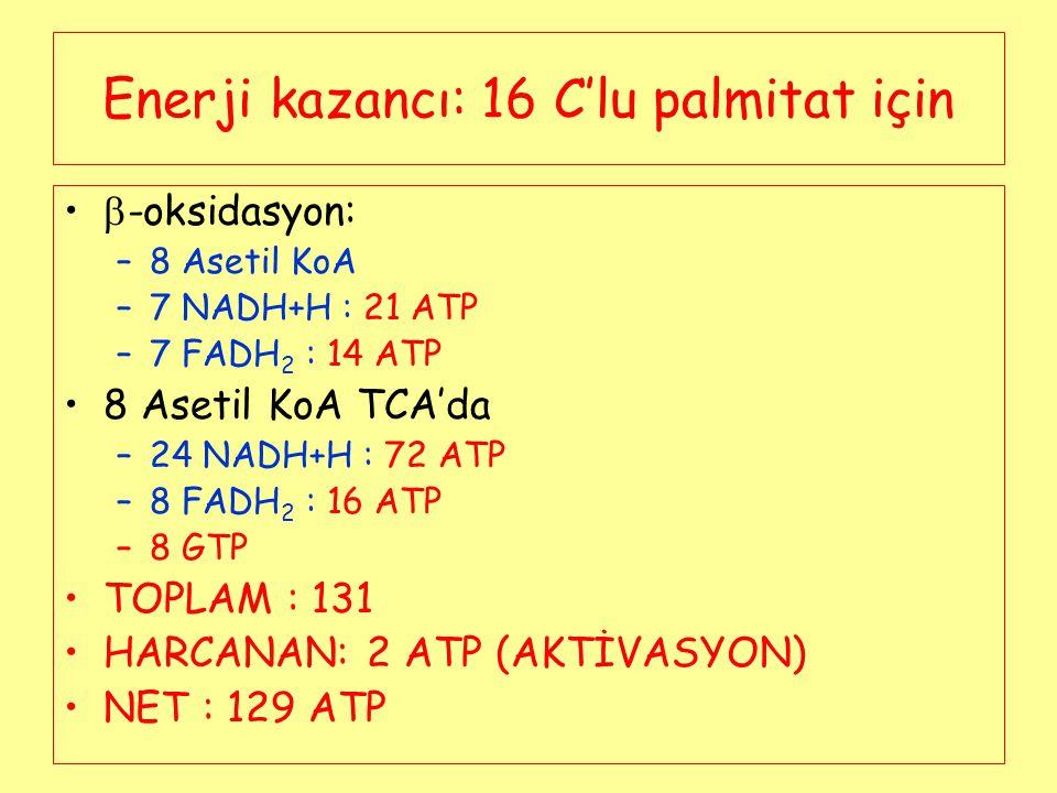Enerji kazancı: 16 C'lu palmitat için  -oksidasyon: –8 Asetil KoA –7 NADH+H : 21 ATP –7 FADH 2 : 14 ATP 8 Asetil KoA TCA'da –24 NADH+H : 72 ATP –8 FA