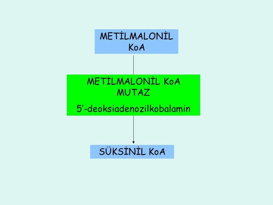 METİLMALONİL KoA METİLMALONİL KoA MUTAZ 5'-deoksiadenozilkobalamin SÜKSİNİL KoA