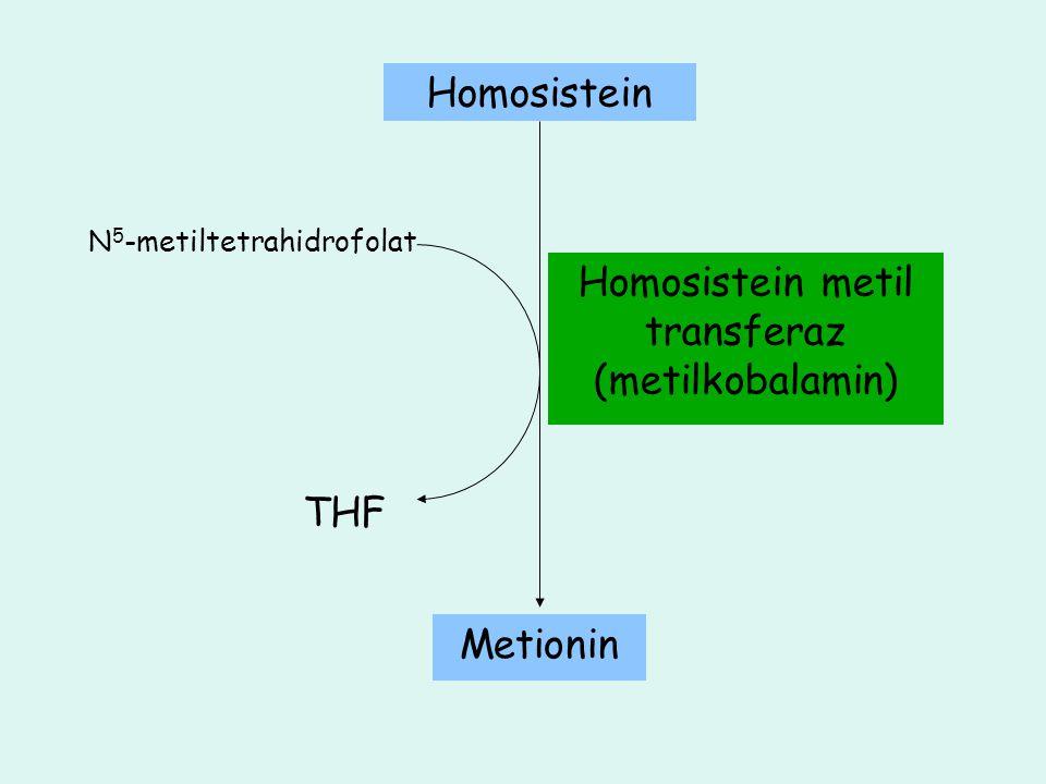 N 5 -metiltetrahidrofolat Homosistein metil transferaz (metilkobalamin) THF Homosistein Metionin