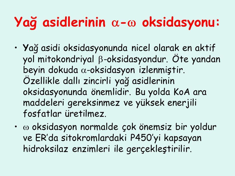 Yağ asidlerinin  -  oksidasyonu: Yağ asidi oksidasyonunda nicel olarak en aktif yol mitokondriyal  -oksidasyondur. Öte yandan beyin dokuda  -oksid