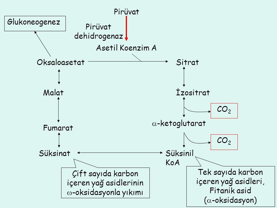 Pirüvat dehidrogenaz Pirüvat Asetil Koenzim A Sitrat İzositrat  -ketoglutarat Süksinil KoA Süksinat Fumarat Malat Oksaloasetat CO 2 Glukoneogenez Tek