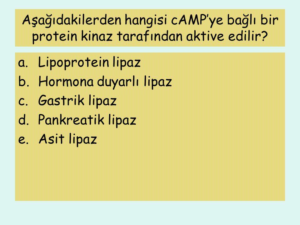 Aşağıdakilerden hangisi cAMP'ye bağlı bir protein kinaz tarafından aktive edilir? a.Lipoprotein lipaz b.Hormona duyarlı lipaz c.Gastrik lipaz d.Pankre