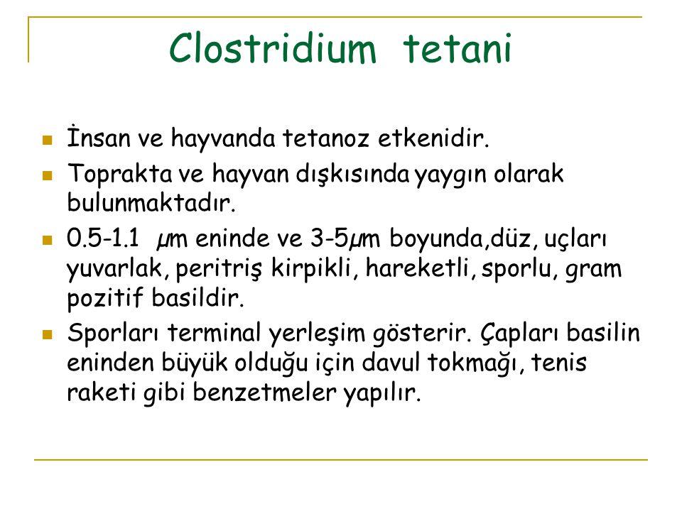 Clostridium tetani İnsan ve hayvanda tetanoz etkenidir. Toprakta ve hayvan dışkısında yaygın olarak bulunmaktadır. 0.5-1.1 µm eninde ve 3-5µm boyunda,