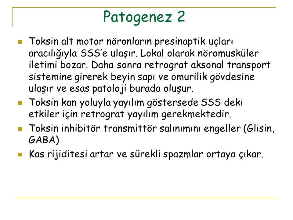 Patogenez 2 Toksin alt motor nöronların presinaptik uçları aracılığıyla SSS'e ulaşır. Lokal olarak nöromusküler iletimi bozar. Daha sonra retrograt ak