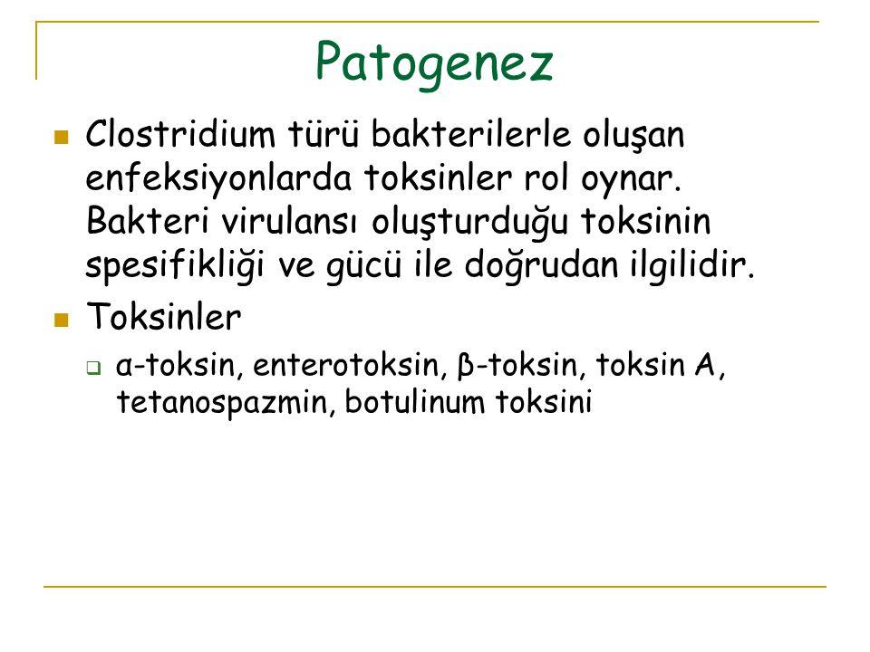 Patogenez Clostridium türü bakterilerle oluşan enfeksiyonlarda toksinler rol oynar. Bakteri virulansı oluşturduğu toksinin spesifikliği ve gücü ile do