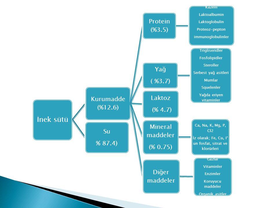 İnek sütü Kurumadde (%12.6) Protein (%3.5) Kazein Laktoalbumin Laktoglobulin Proteoz-pepton immunoglobulinler Yağ ( %3.7) Trigliseridler Fosfolipidler