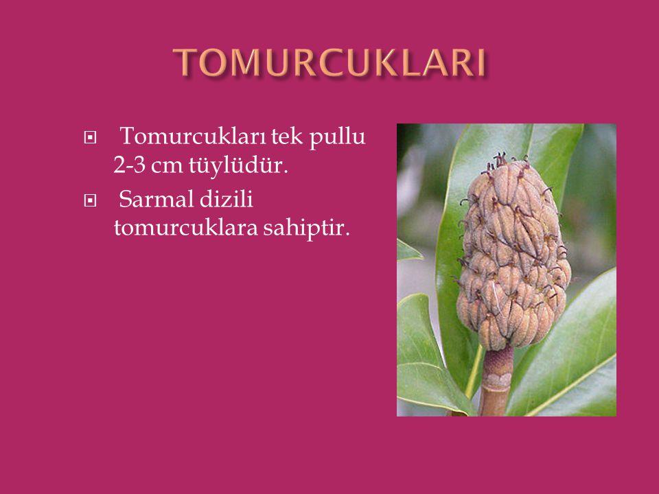  Tomurcukları tek pullu 2-3 cm tüylüdür.  Sarmal dizili tomurcuklara sahiptir.