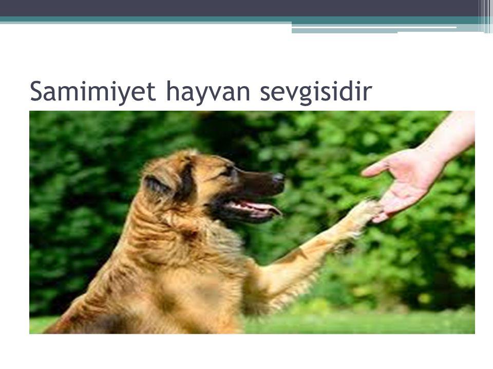 Samimiyet hayvan sevgisidir