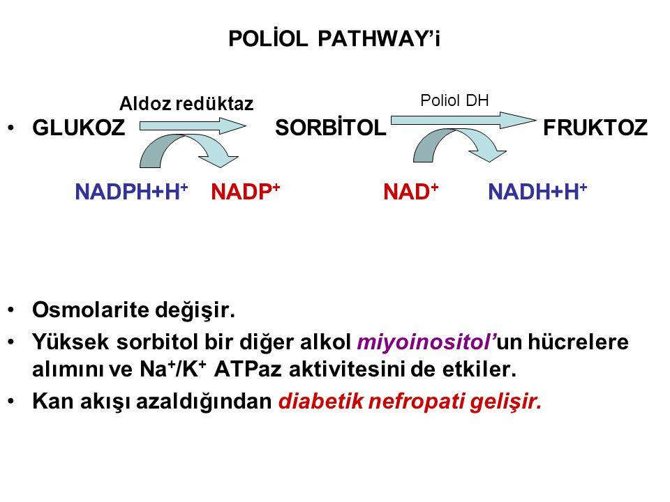 POLİOL PATHWAY'i GLUKOZSORBİTOLFRUKTOZ NADPH+H + NADP + NAD + NADH+H + Osmolarite değişir. Yüksek sorbitol bir diğer alkol miyoinositol'un hücrelere a