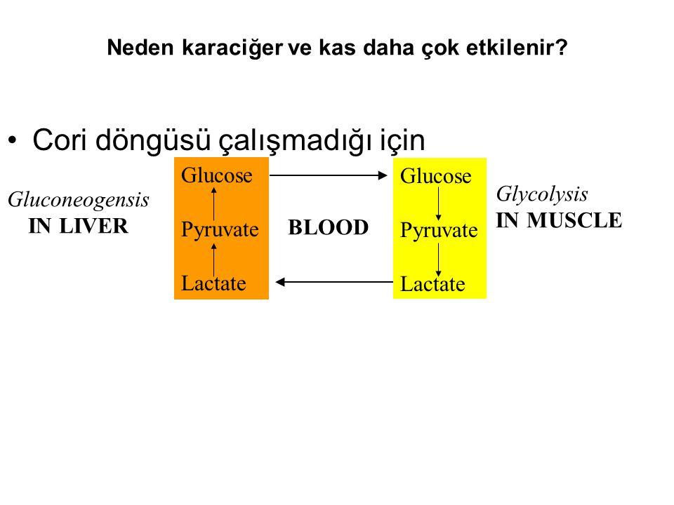 Neden karaciğer ve kas daha çok etkilenir? Cori döngüsü çalışmadığı için Glucose Pyruvate Lactate Gluconeogensis IN LIVER Glycolysis IN MUSCLE Glucose