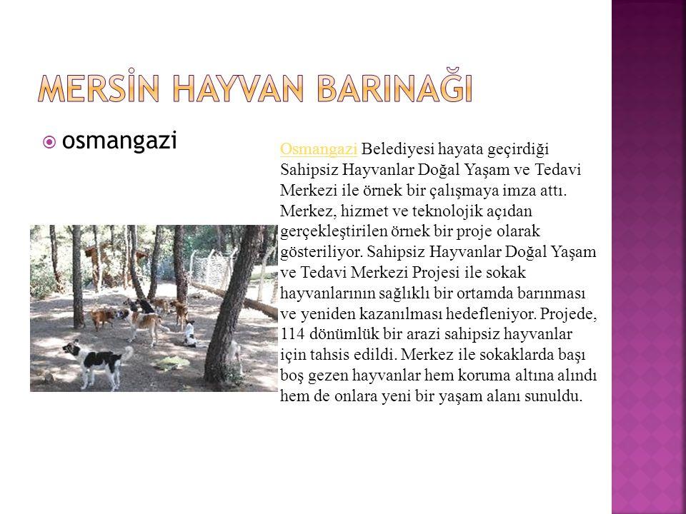  osmangazi OsmangaziOsmangazi Belediyesi hayata geçirdiği Sahipsiz Hayvanlar Doğal Yaşam ve Tedavi Merkezi ile örnek bir çalışmaya imza attı.