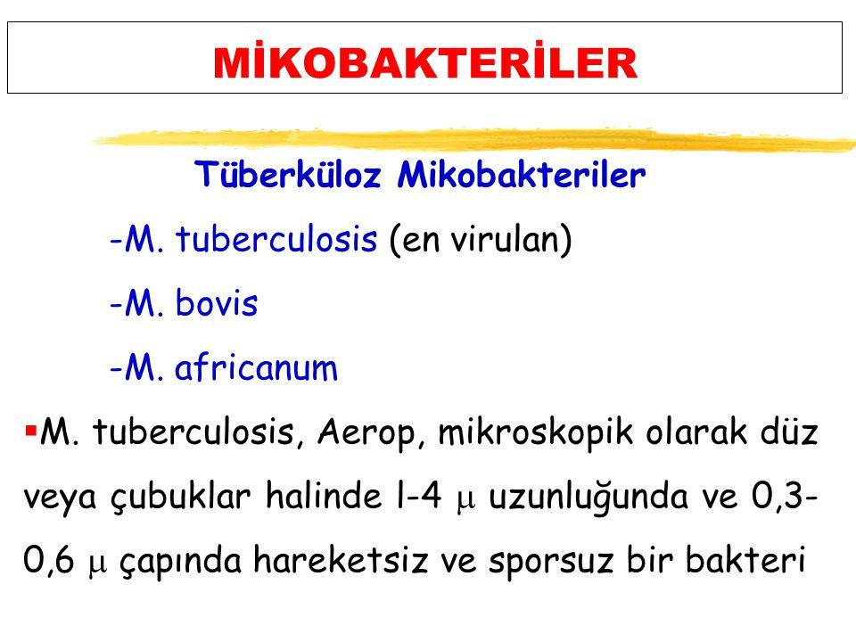 MİKOBAKTERİLER Tüberküloz Mikobakteriler -M.tuberculosis (en virulan) -M.
