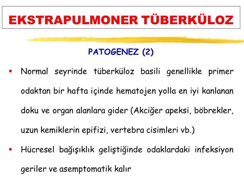 EKSTRAPULMONER TÜBERKÜLOZ PATOGENEZ (2)  Normal seyrinde tüberküloz basili genellikle primer odaktan bir hafta içinde hematojen yolla en iyi kanlanan doku ve organ alanlara gider (Akciğer apeksi, böbrekler, uzun kemiklerin epifizi, vertebra cisimleri vb.)  Hücresel bağışıklık geliştiğinde odaklardaki infeksiyon geriler ve asemptomatik kalır