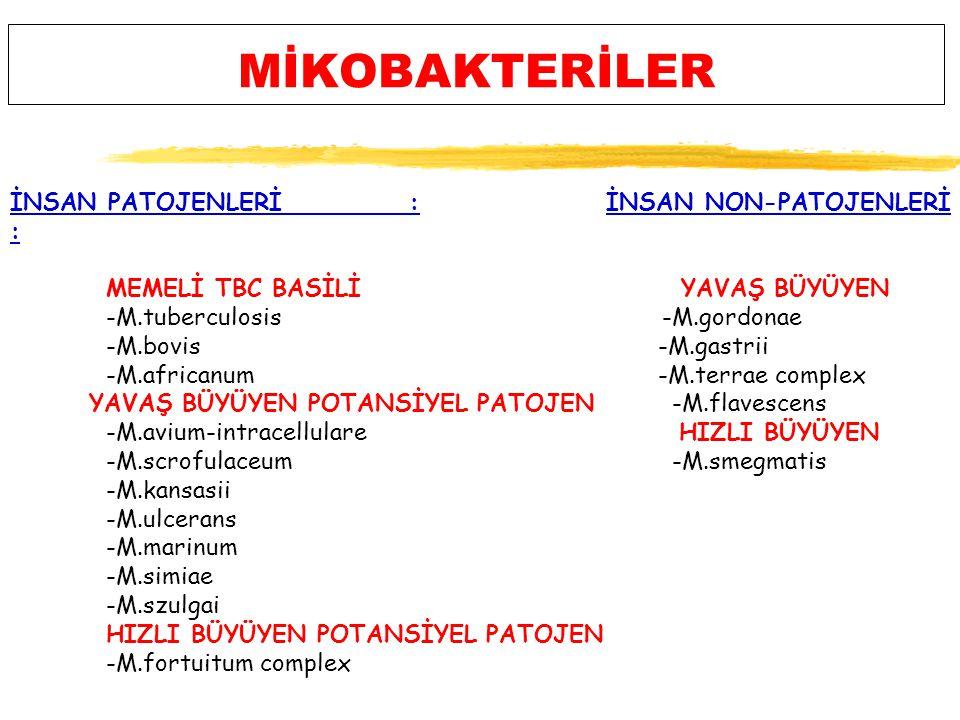 MİKOBAKTERİLER İNSAN PATOJENLERİ : İNSAN NON-PATOJENLERİ : MEMELİ TBC BASİLİ YAVAŞ BÜYÜYEN -M.tuberculosis -M.gordonae -M.bovis -M.gastrii -M.africanum -M.terrae complex YAVAŞ BÜYÜYEN POTANSİYEL PATOJEN -M.flavescens -M.avium-intracellulare HIZLI BÜYÜYEN -M.scrofulaceum -M.smegmatis -M.kansasii -M.ulcerans -M.marinum -M.simiae -M.szulgai HIZLI BÜYÜYEN POTANSİYEL PATOJEN -M.fortuitum complex