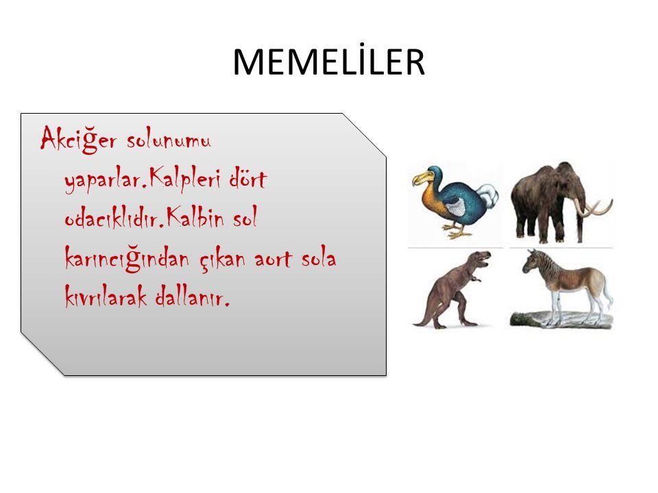 TESEKÜRLER!!!
