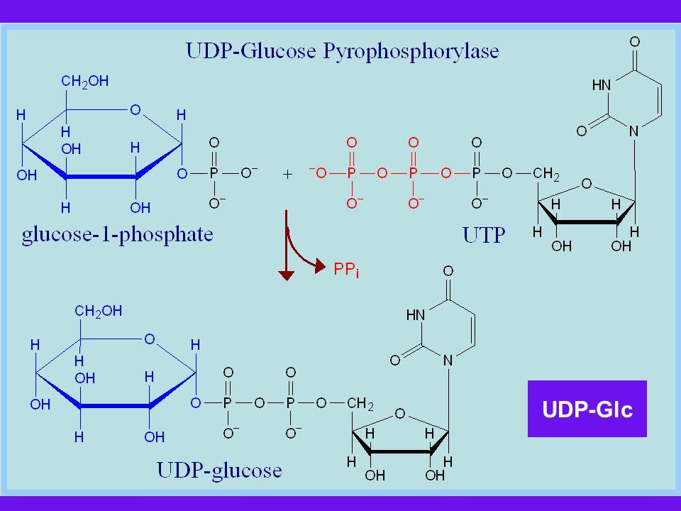 UDP-Glc