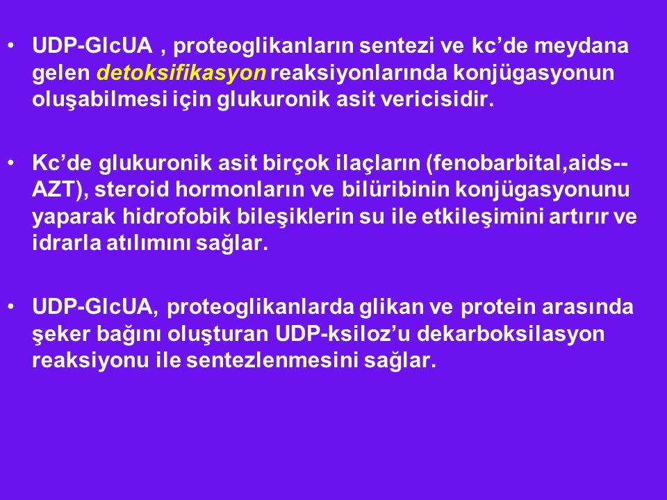 UDP-GlcUA, proteoglikanların sentezi ve kc'de meydana gelen detoksifikasyon reaksiyonlarında konjügasyonun oluşabilmesi için glukuronik asit vericisid