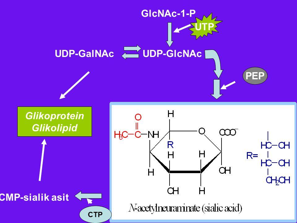 UTP UDP-GlcNAcUDP-GalNAc Glikoprotein Glikolipid PEP CMP-sialik asit CTP