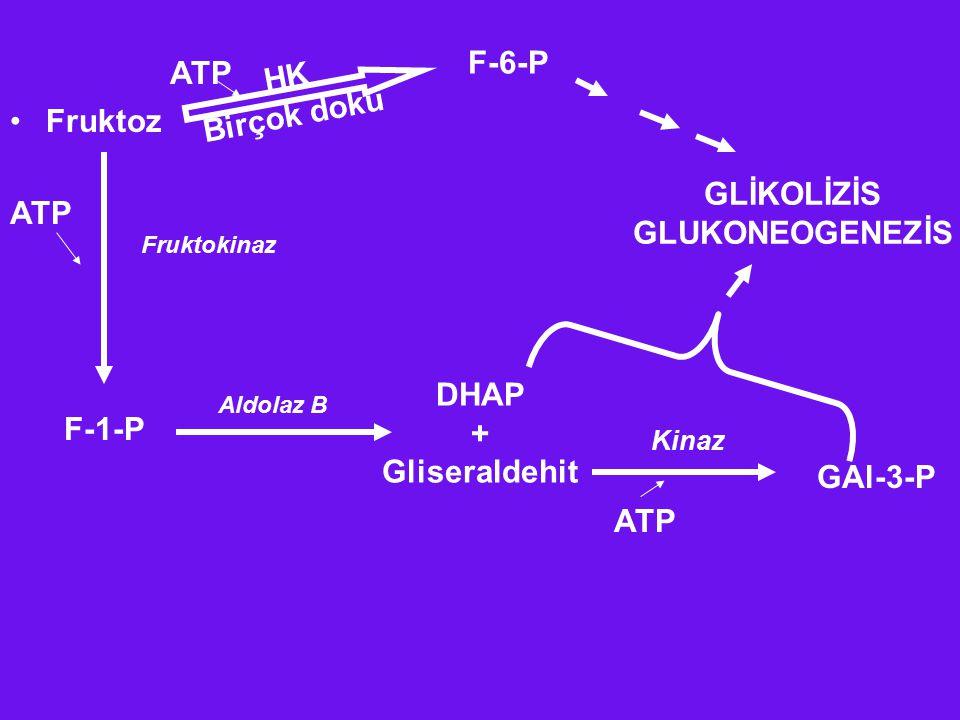 F-6-P Fruktoz HK Birçok doku ATP F-1-P DHAP + Gliseraldehit GAl-3-P Kinaz ATP Aldolaz B Fruktokinaz ATP GLİKOLİZİS GLUKONEOGENEZİS