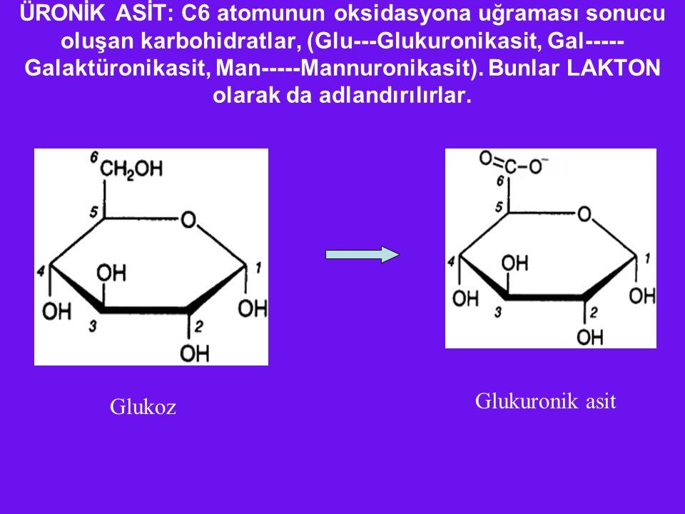 ÜRONİK ASİT: C6 atomunun oksidasyona uğraması sonucu oluşan karbohidratlar, (Glu---Glukuronikasit, Gal----- Galaktüronikasit, Man-----Mannuronikasit).