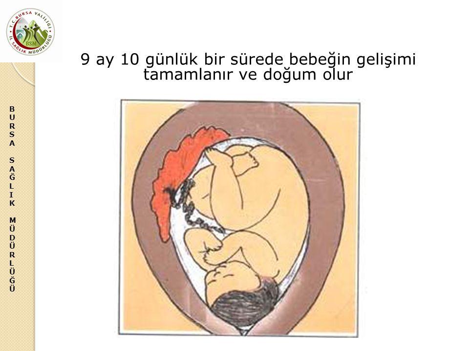 BURSASAĞLIKMÜDÜRLÜĞÜBURSASAĞLIKMÜDÜRLÜĞÜ 9 ay 10 günlük bir sürede bebeğin gelişimi tamamlanır ve doğum olur