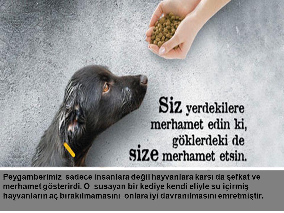 Peygamberimiz sadece insanlara değil hayvanlara karşı da şefkat ve merhamet gösterirdi.