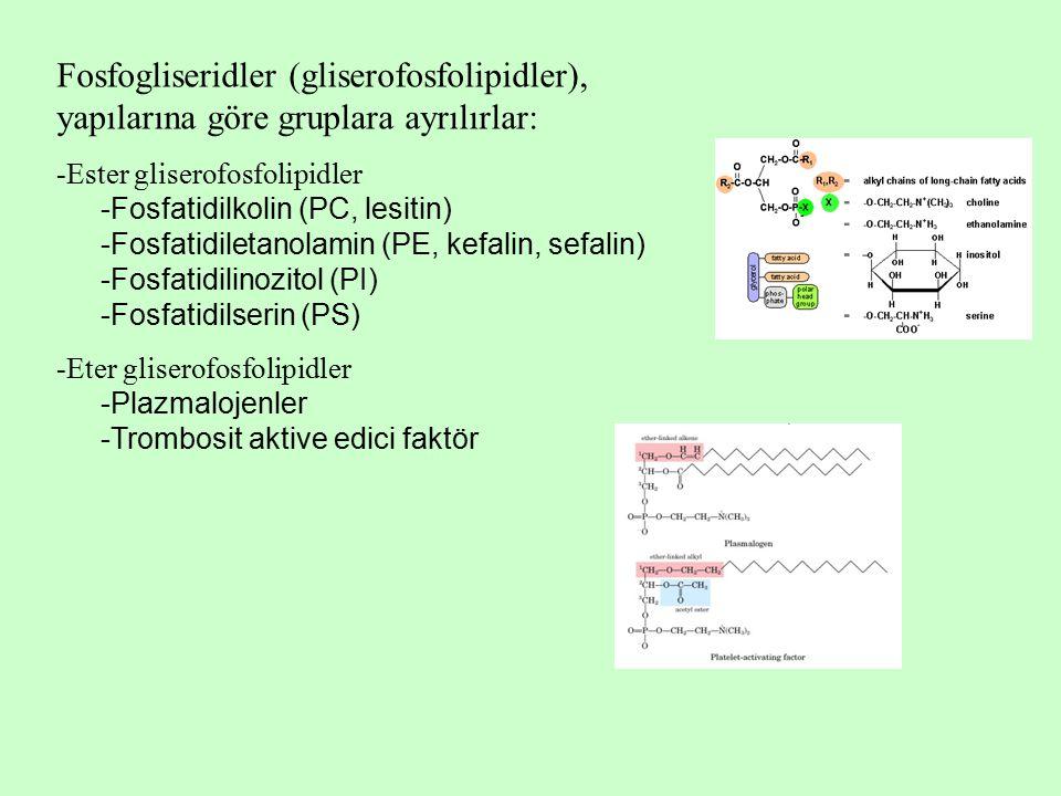 Fosfogliseridler (gliserofosfolipidler), yapılarına göre gruplara ayrılırlar: -Ester gliserofosfolipidler -Fosfatidilkolin (PC, lesitin) -Fosfatidiletanolamin (PE, kefalin, sefalin) -Fosfatidilinozitol (PI) -Fosfatidilserin (PS) -Eter gliserofosfolipidler -Plazmalojenler -Trombosit aktive edici faktör
