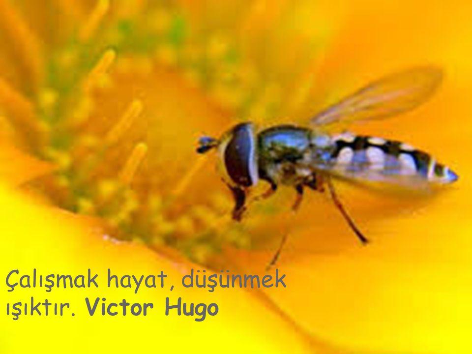 Çalışmak hayat, düşünmek ışıktır. Victor Hugo