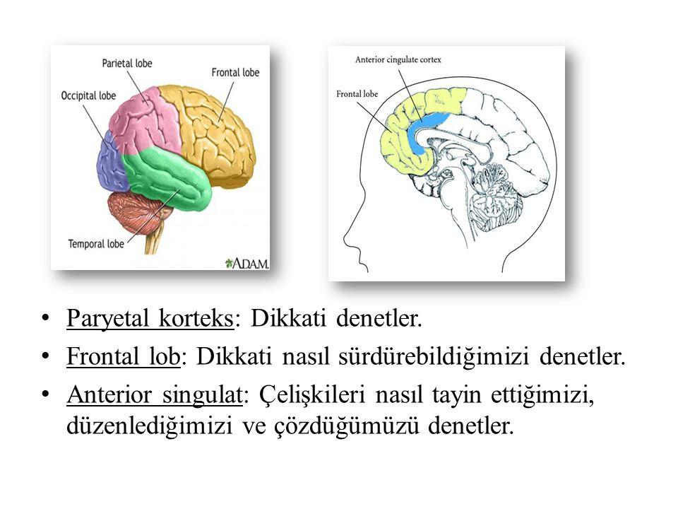Paryetal korteks: Dikkati denetler. Frontal lob: Dikkati nasıl sürdürebildiğimizi denetler. Anterior singulat: Çelişkileri nasıl tayin ettiğimizi, düz