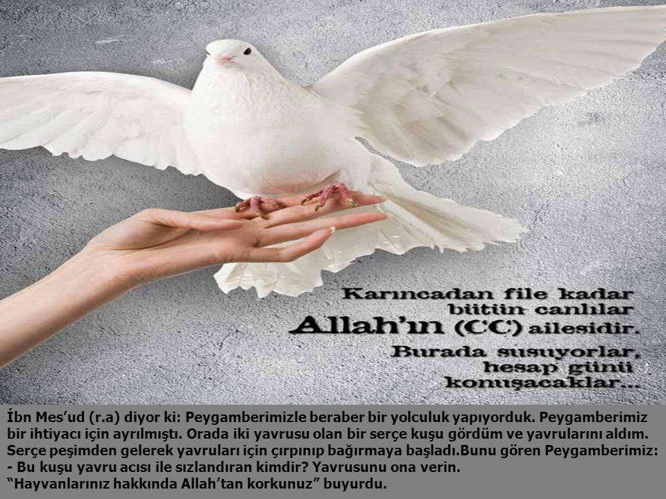 İbn Mes'ud (r.a) diyor ki: Peygamberimizle beraber bir yolculuk yapıyorduk.