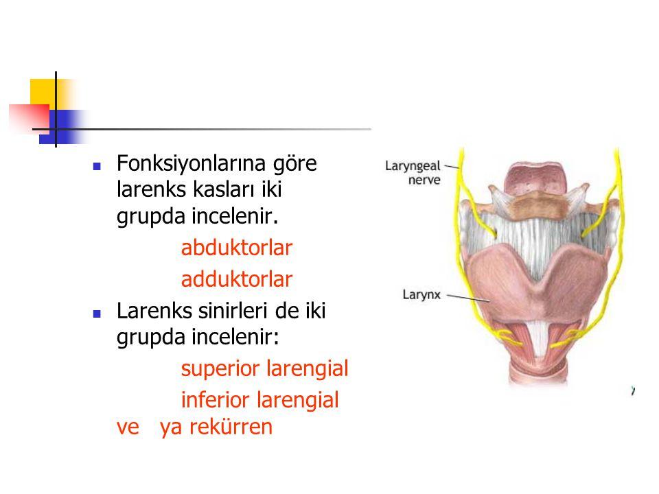Fonksiyonlarına göre larenks kasları iki grupda incelenir. abduktorlar adduktorlar Larenks sinirleri de iki grupda incelenir: superior larengial infer