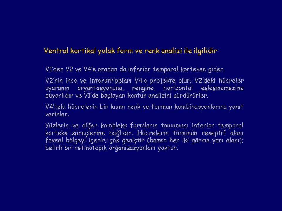 Ventral kortikal yolak form ve renk analizi ile ilgilidir V1'den V2 ve V4'e oradan da inferior temporal kortekse gider.