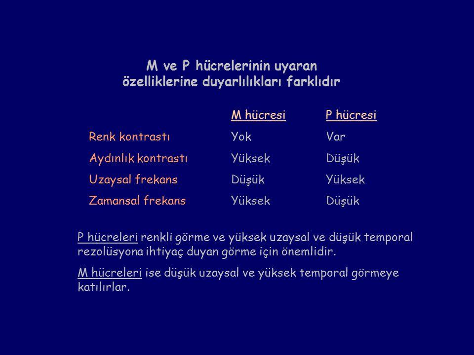 M hücresiP hücresi Renk kontrastıYokVar Aydınlık kontrastıYüksekDüşük Uzaysal frekansDüşükYüksek Zamansal frekansYüksekDüşük M ve P hücrelerinin uyaran özelliklerine duyarlılıkları farklıdır P hücreleri renkli görme ve yüksek uzaysal ve düşük temporal rezolüsyona ihtiyaç duyan görme için önemlidir.