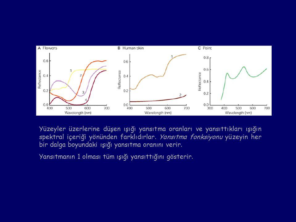Yüzeyler üzerlerine düşen ışığı yansıtma oranları ve yansıttıkları ışığın spektral içeriği yönünden farklıdırlar.