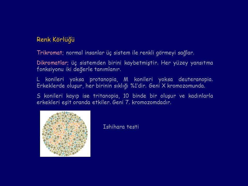 Renk Körlüğü Trikromat; normal insanlar üç sistem ile renkli görmeyi sağlar.