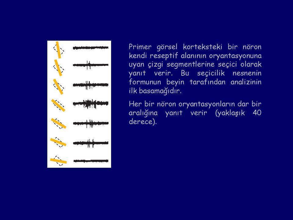 Primer görsel korteksteki bir nöron kendi reseptif alanının oryantasyonuna uyan çizgi segmentlerine seçici olarak yanıt verir.