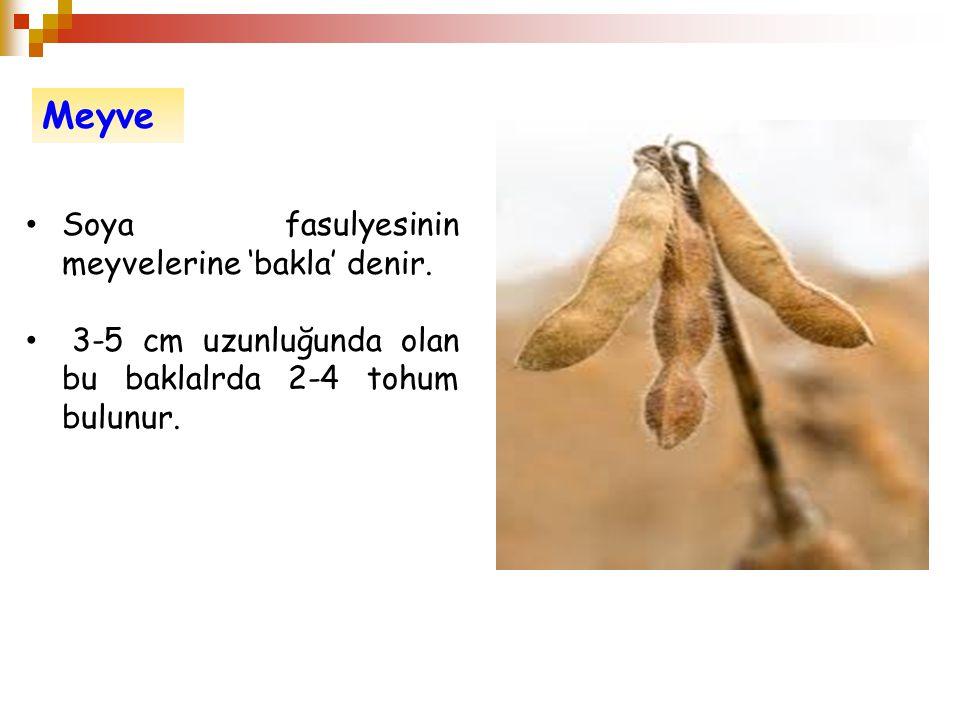 Meyve Soya fasulyesinin meyvelerine 'bakla' denir.