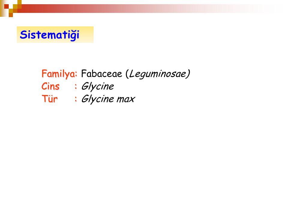 Familya: Familya: Fabaceae (Leguminosae) Cins: Cins: Glycine Tür: Tür: Glycine max Sistematiği
