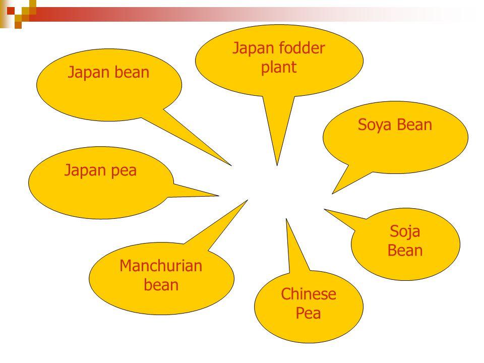 Soya Bean Soja Bean Chinese Pea Manchurian bean Japan pea Japan bean Japan fodder plant