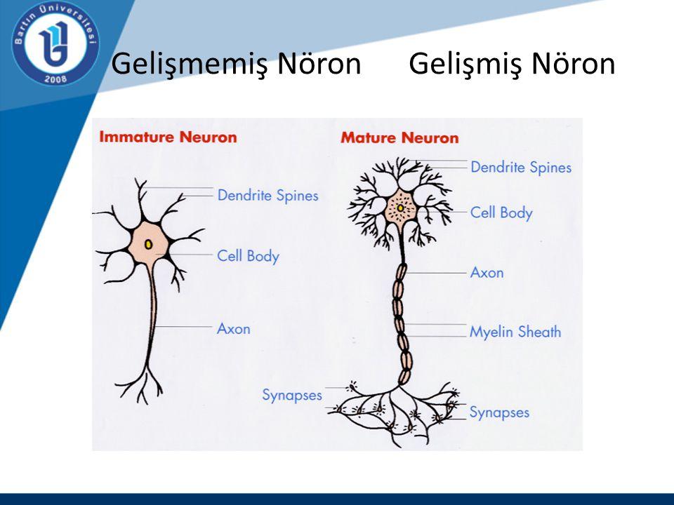 Gelişmemiş Nöron Gelişmiş Nöron