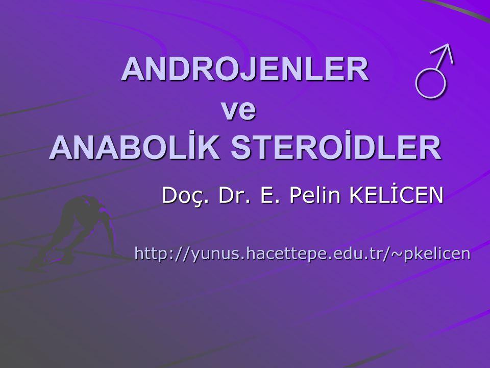 ANDROJENLER ve ANABOLİK STEROİDLER Doç. Dr. E. Pelin KELİCEN http://yunus.hacettepe.edu.tr/~pkelicen ♂