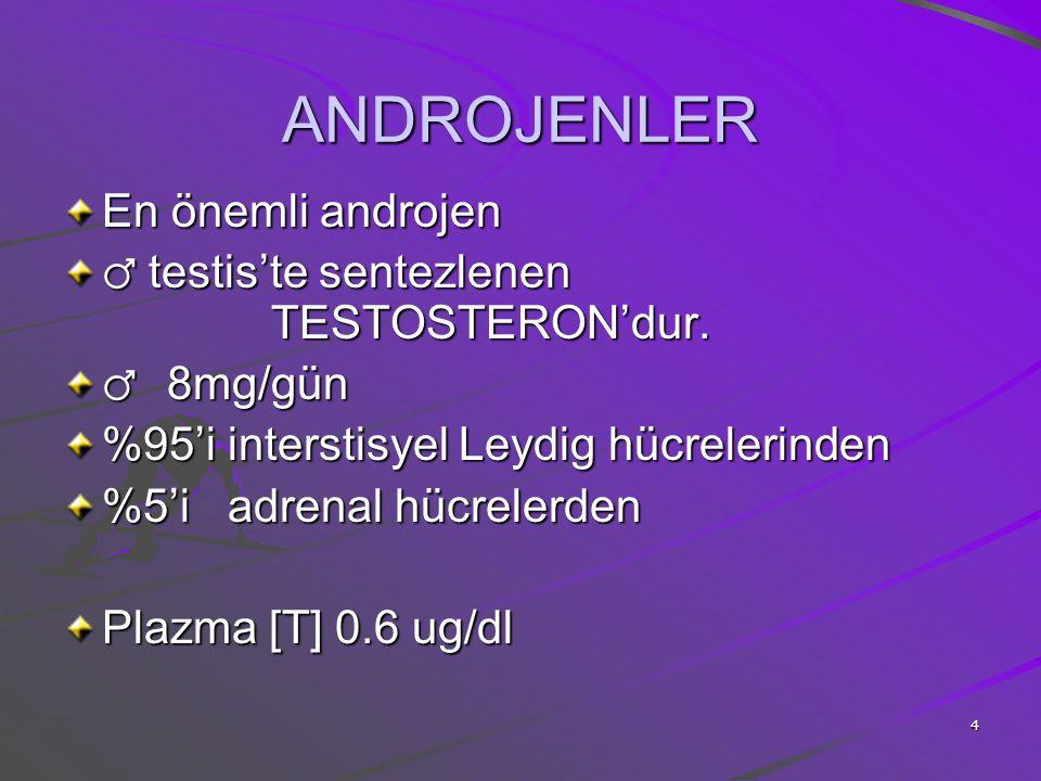 4 ANDROJENLER En önemli androjen ♂ testis'te sentezlenen TESTOSTERON'dur. ♂ 8mg/gün %95'i interstisyel Leydig hücrelerinden %5'i adrenal hücrelerden P