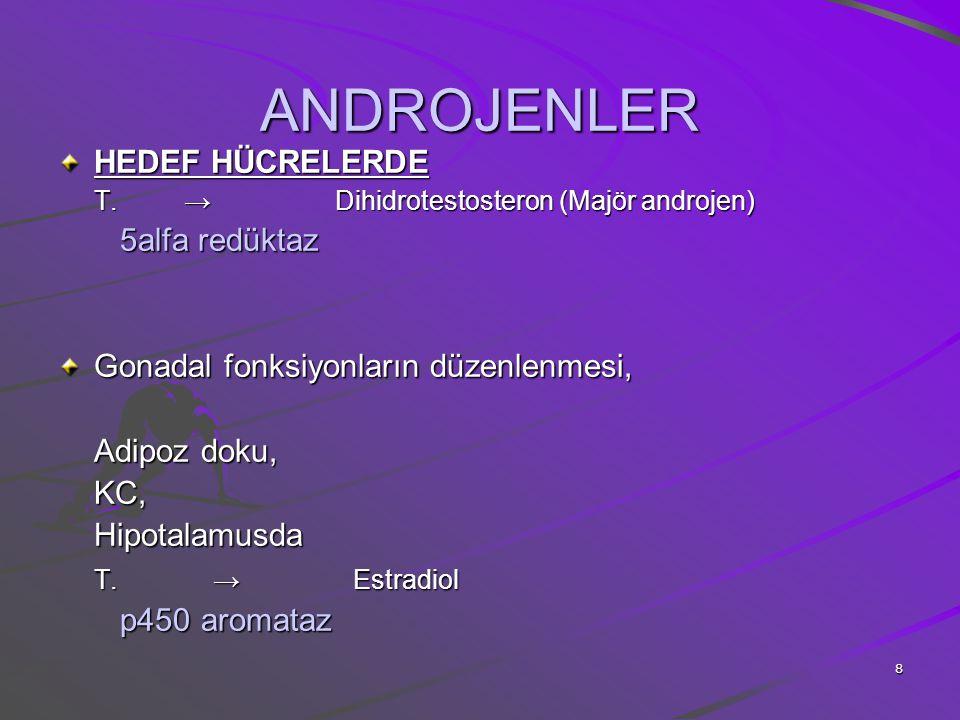 8 ANDROJENLER HEDEF HÜCRELERDE T. → Dihidrotestosteron (Majör androjen) 5alfa redüktaz 5alfa redüktaz Gonadal fonksiyonların düzenlenmesi, Adipoz doku